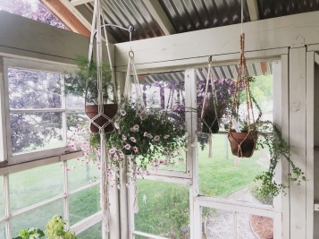oh okay, twist my arm. plants + macrame hangers.