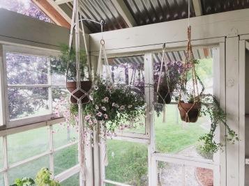 oh okay, twist my arm. plants + macrame hangers.